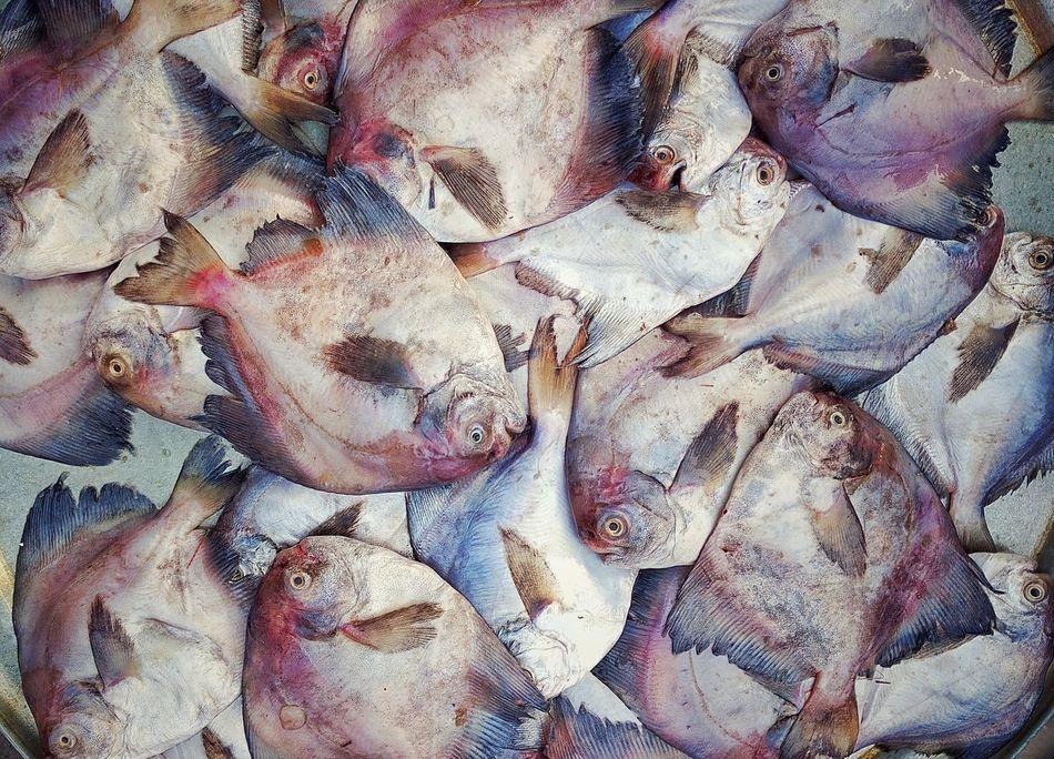 Fish Market Fish Fish For Sale Mumbai Bhau Cha Dhakka Princess Docks Looking In Different Directions