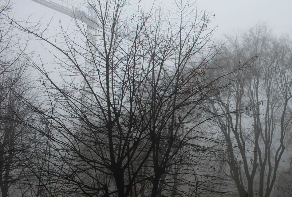 Bare Trees Branches Construction Crane Day February 2017 Foggy Morning Milano No People Outdoors Winter