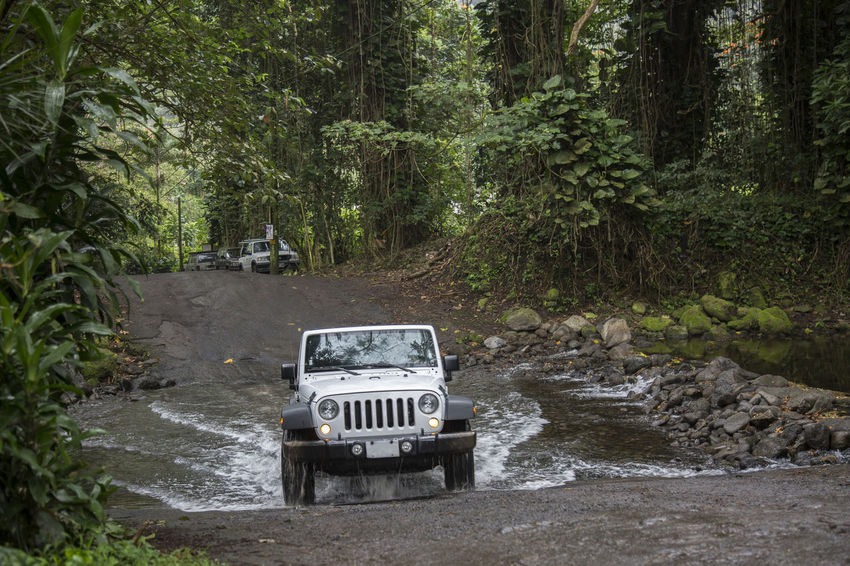 4 WD car is crossing river in jungle 4wd 4x4 4x4 Travel Automobile Hawaii Outdoor Activity Transportation Adventure Bad Road Conditions Day Difficult Forest Jungle Lush Green Nature No People Outdoors River Crossing Road Trip Travel Destinations Tree