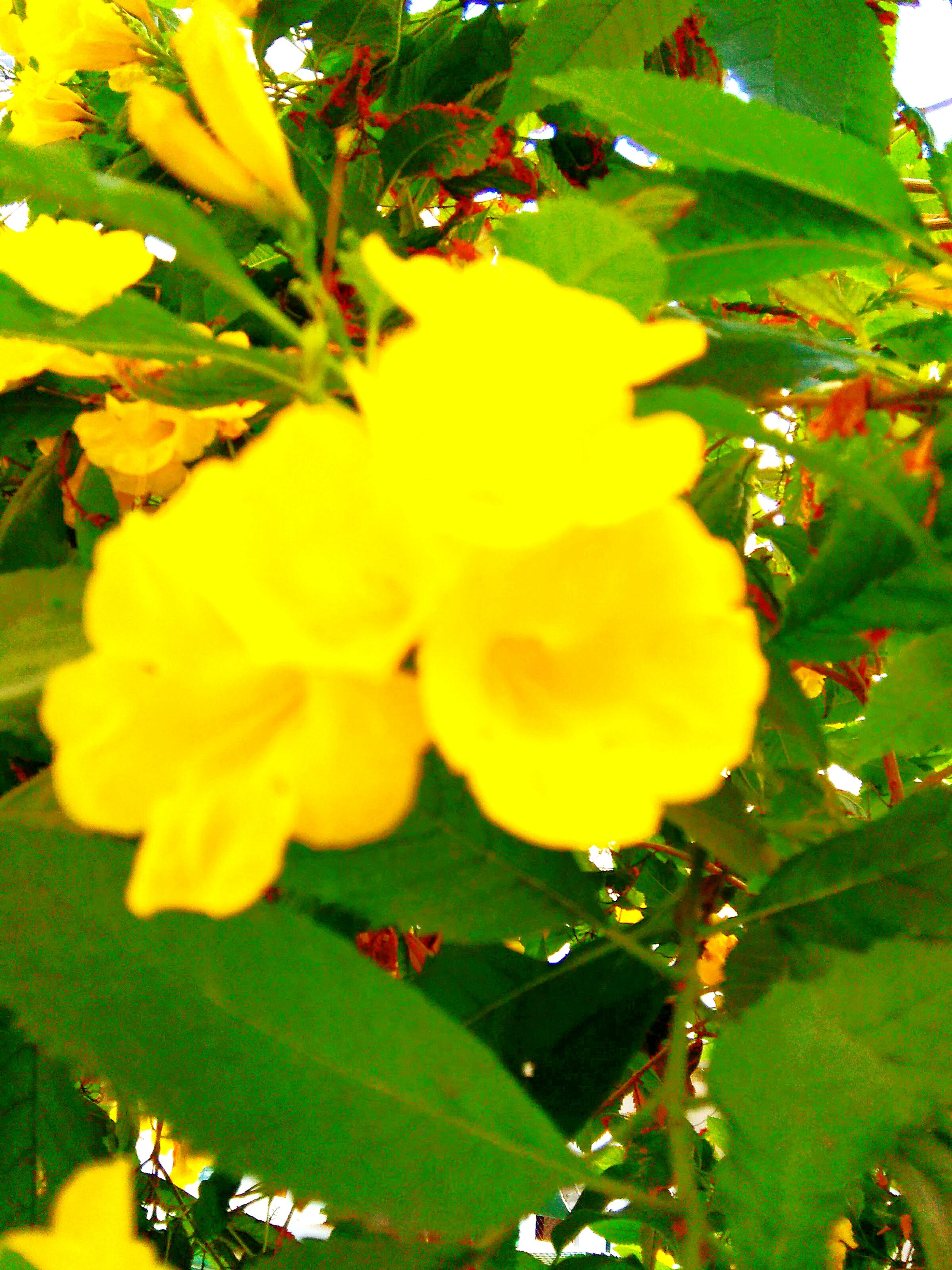 flower, nature, growth, yellow, beauty in nature, plant, freshness, close-up, fragility, no people, leaf, outdoors, day, flower head