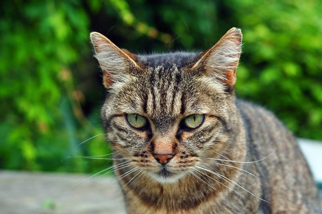 Tigrette Cat Cats Cat♡ Cat Lovers Catsofinstagram Catoftheday Cats Of EyeEm Catlovers