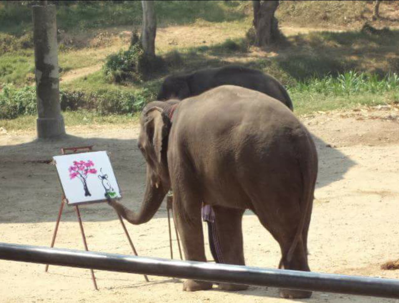 animal themes, day, elephant, one animal, no people, outdoors, mammal, domestic animals, nature, tree