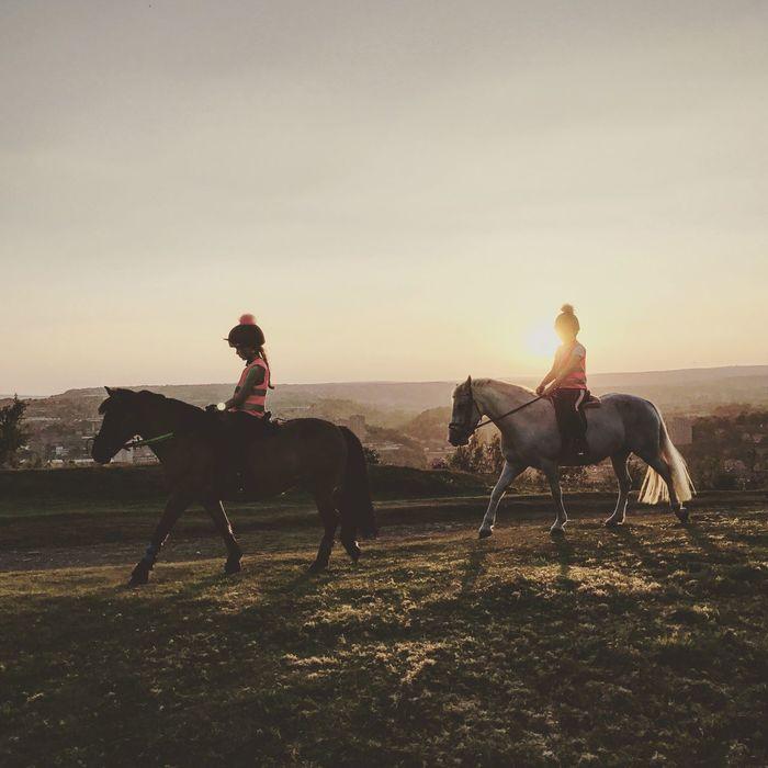 Safetyfirst Horse Horses Sunset Shadow Kids Pony Zachod Dzieci