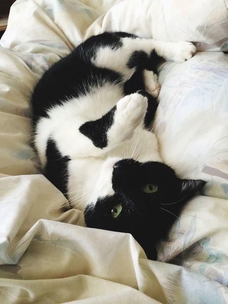 cats are so desperate... Cat Cats Cat♡ Catoftheday Miaou Miaou ! Miaouuu Lovely Cat