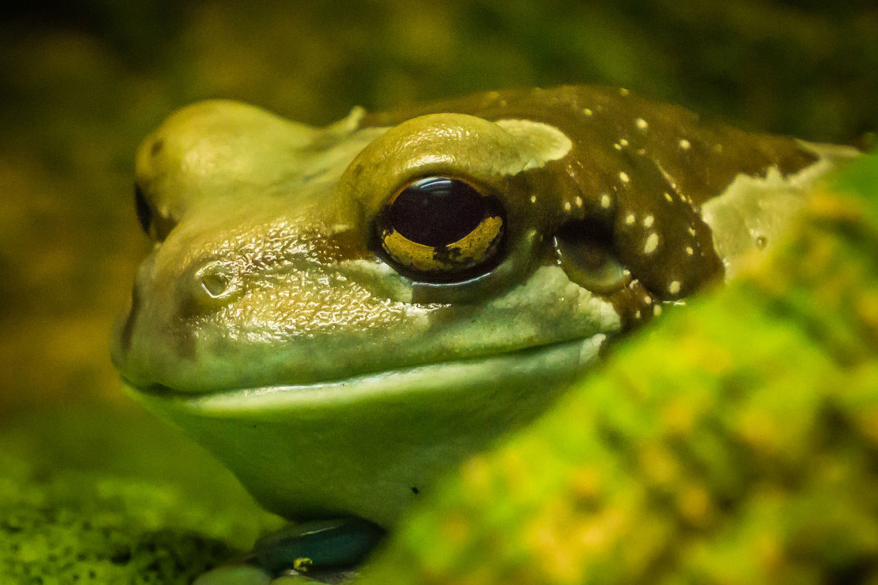 Frosch Heikobo Frosch Natur Froschkönig