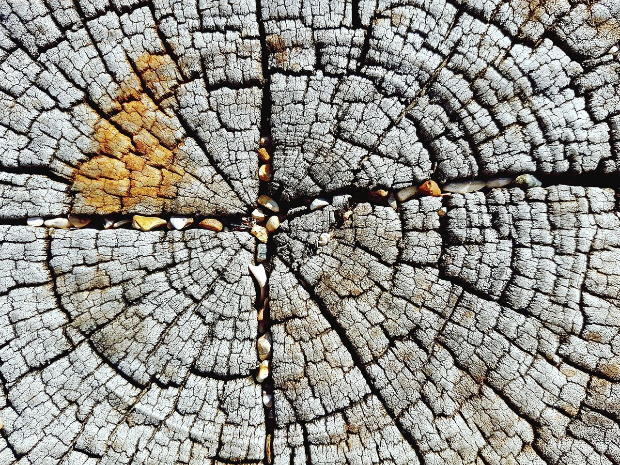 Backgrounds Full Frame Cracked Tree Ring Outdoors No People Textured  Wood - Material Nature Tree Day Close-up Tree Stump Concentric