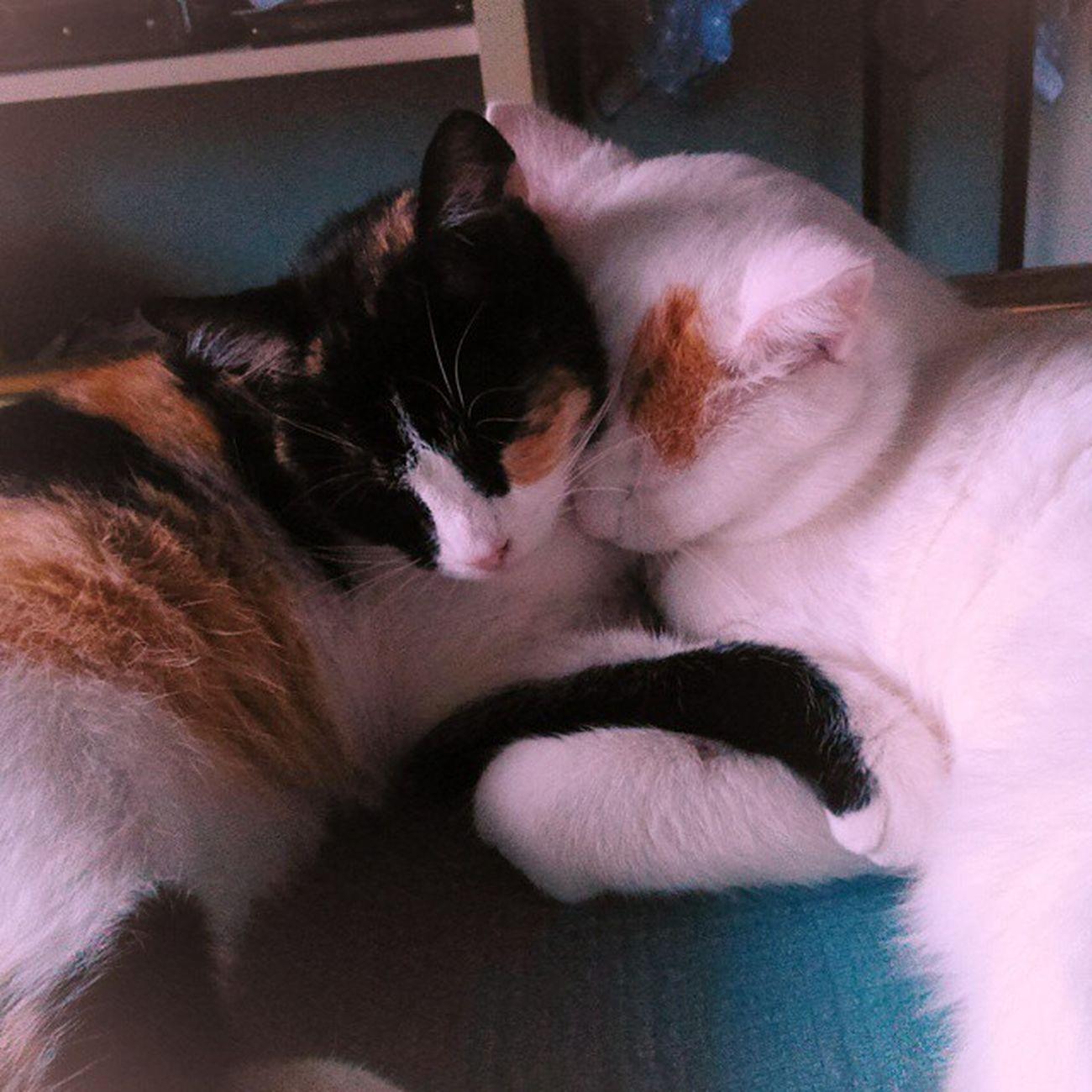 So much love. 💖 Mici Abbraccio Nanna Dolci