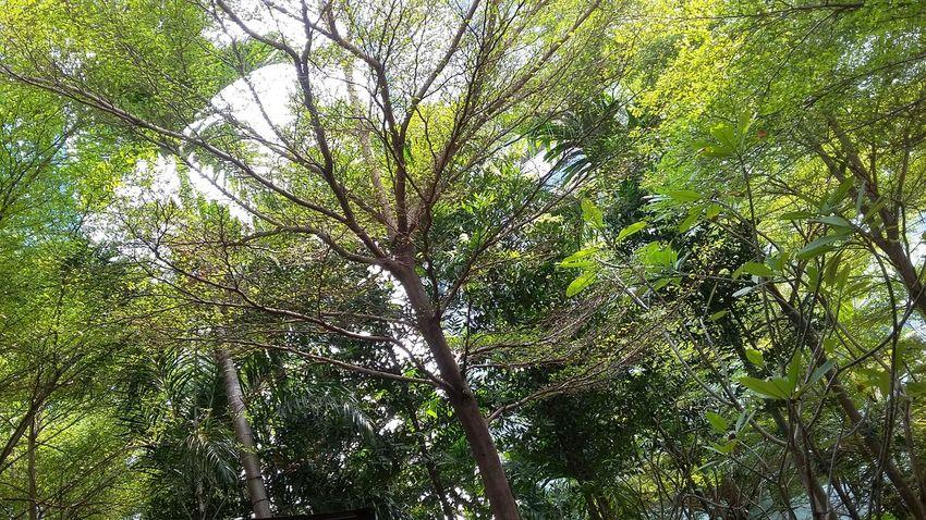 Nature On Your Doorstep EyeEm Nature Lover Jakarta Indonesia Go Green Feel Green EyeEm Best Shots - Nature