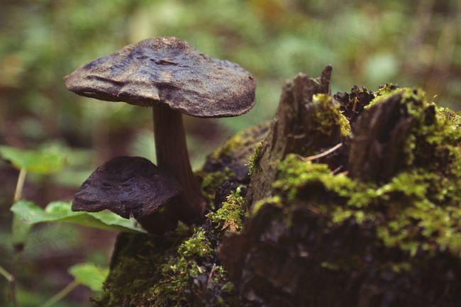 Beauty In Nature Nikon Russia 2016 VSCO Vscocam Majestic Mushroom Mushrooms Magic. Macro Macro Nature