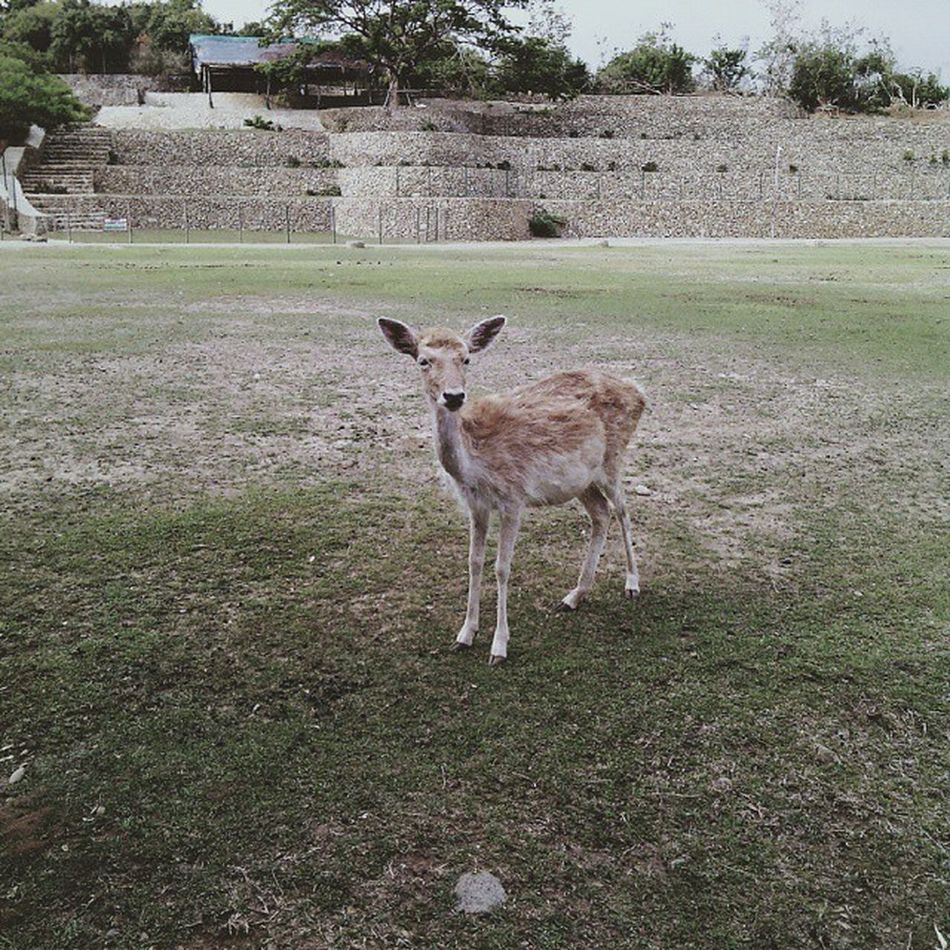 Vscocam Baluarte Ilocossur2015 Vscopinas Vscocam Vscogood VSCO Travel Vscophilippines Animal KAWAII Nature Wildlife Free Philippines Animallovers Baluartezoo BaluarteNiChavit Vsco111