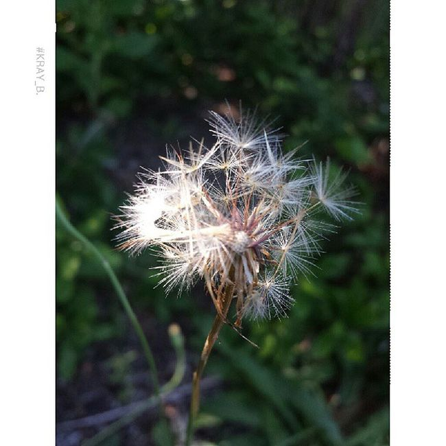 Flowers Pretty Gorgeous Insta_pic picoftheday photooftheday wildweed nice mothernature