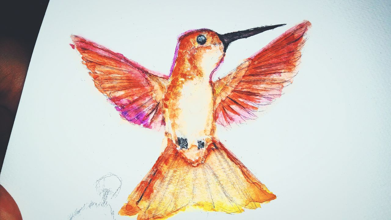 Hummingbird Painting Photography Watercolor Art, Drawing, Creativity