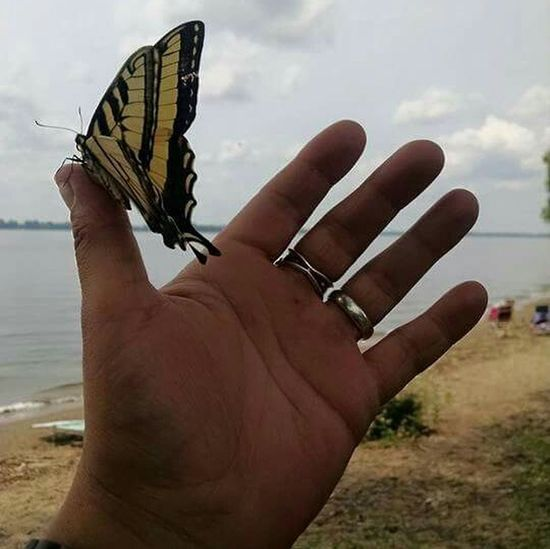 United... Butterfly Tame Serenity Nature_collection Nature_collection Nature Photography Relaxing Check This Out Water Reflections New York