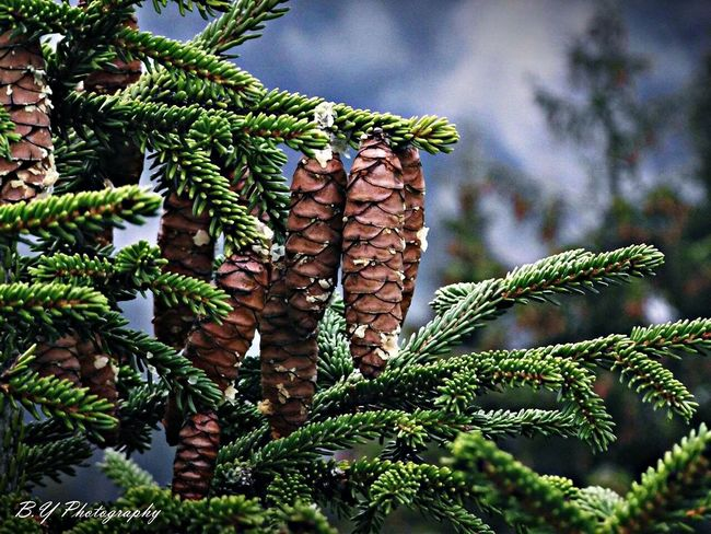 Forest Tree Wild Life Photo