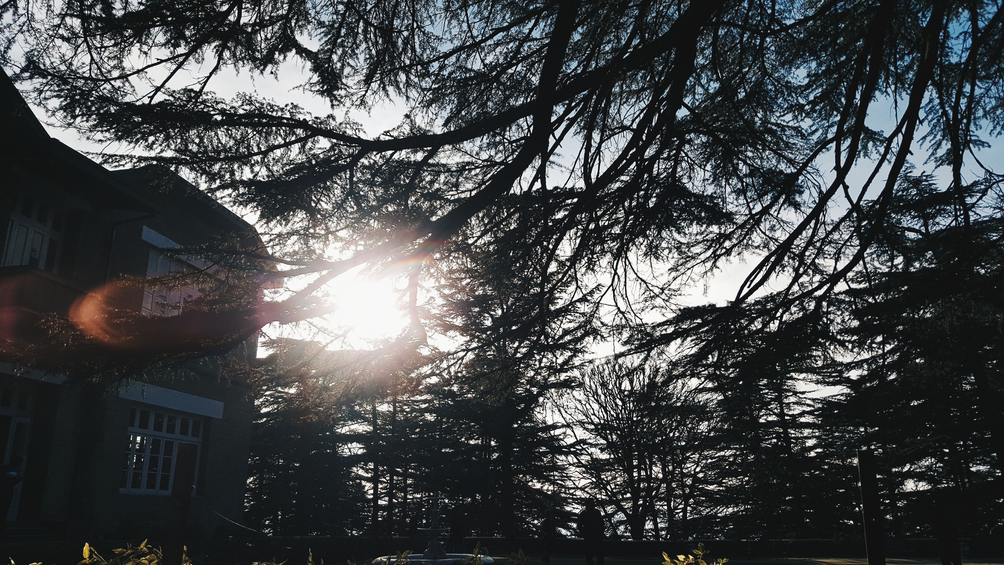 VSCO VSCO Cam Vscocam Vscodaily Smartphone Photography Smartphonephotography Samsung Galaxy S6 Camera Samsung Galaxy S6 Edge Trees And Nature Trees Collection Trees And Sun Sunlight Sunlight And Trees Nature Photography Nature_collection Shimla India DaryllSwer EyeEm Selects