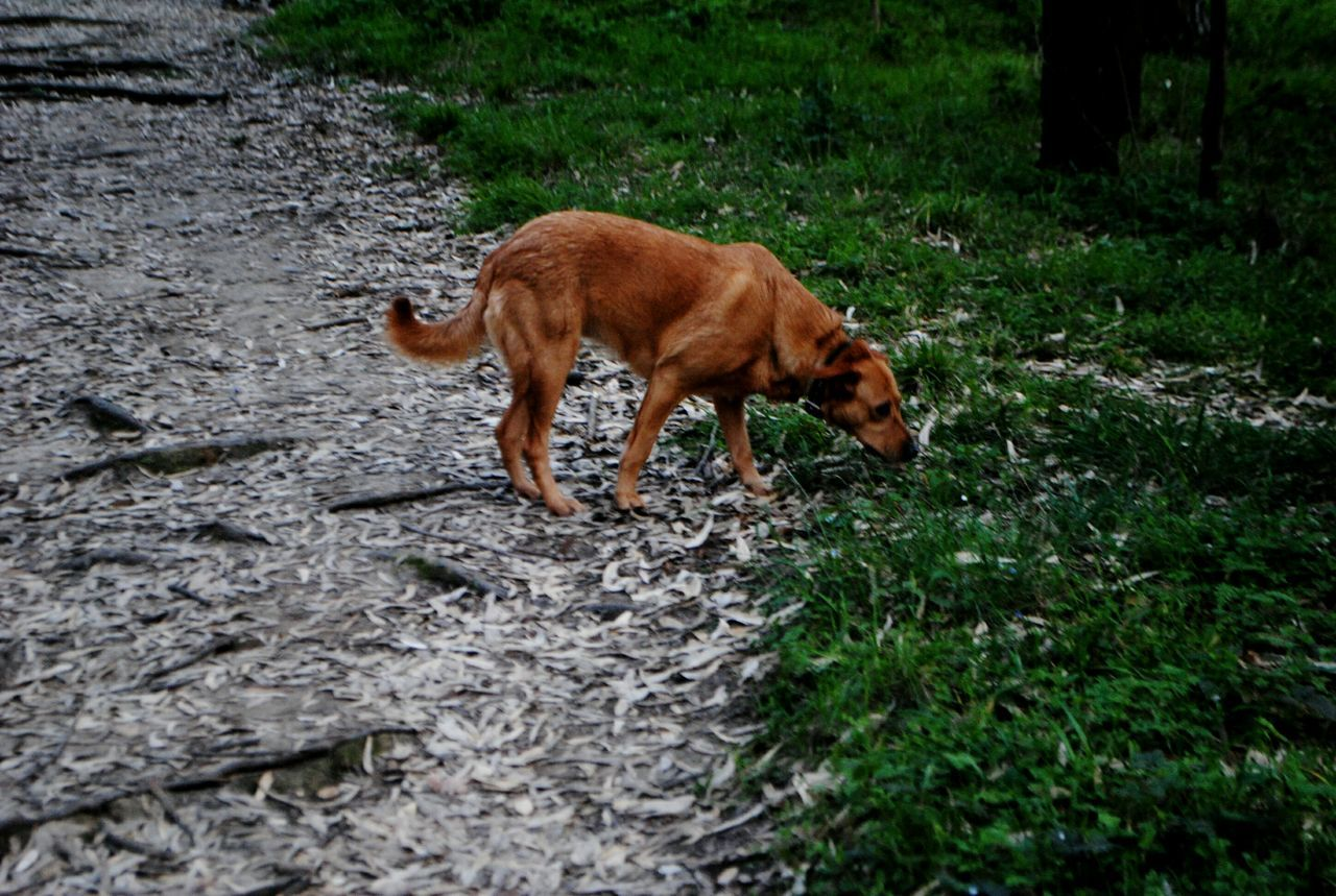 one animal, animal themes, walking, mammal, no people, grass, nature, day, outdoors