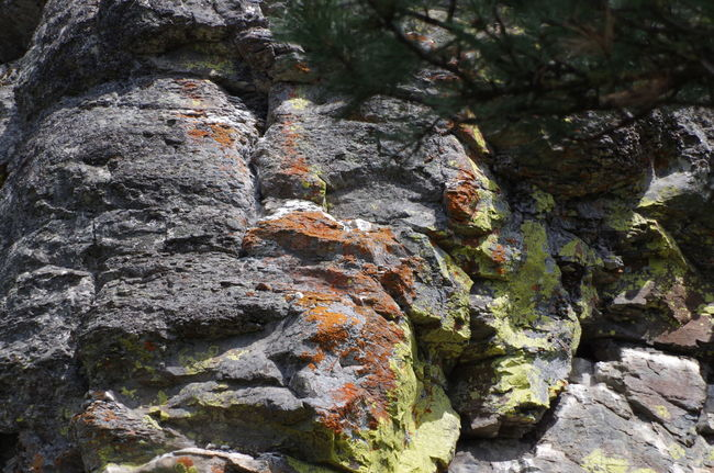 Lichens color rock for different look.. Beauty In Nature Day Green Color Growth Lichens Natural Pattern Nature No People Outdoors Rock - Object Rock Formation Rough Scenics Textured