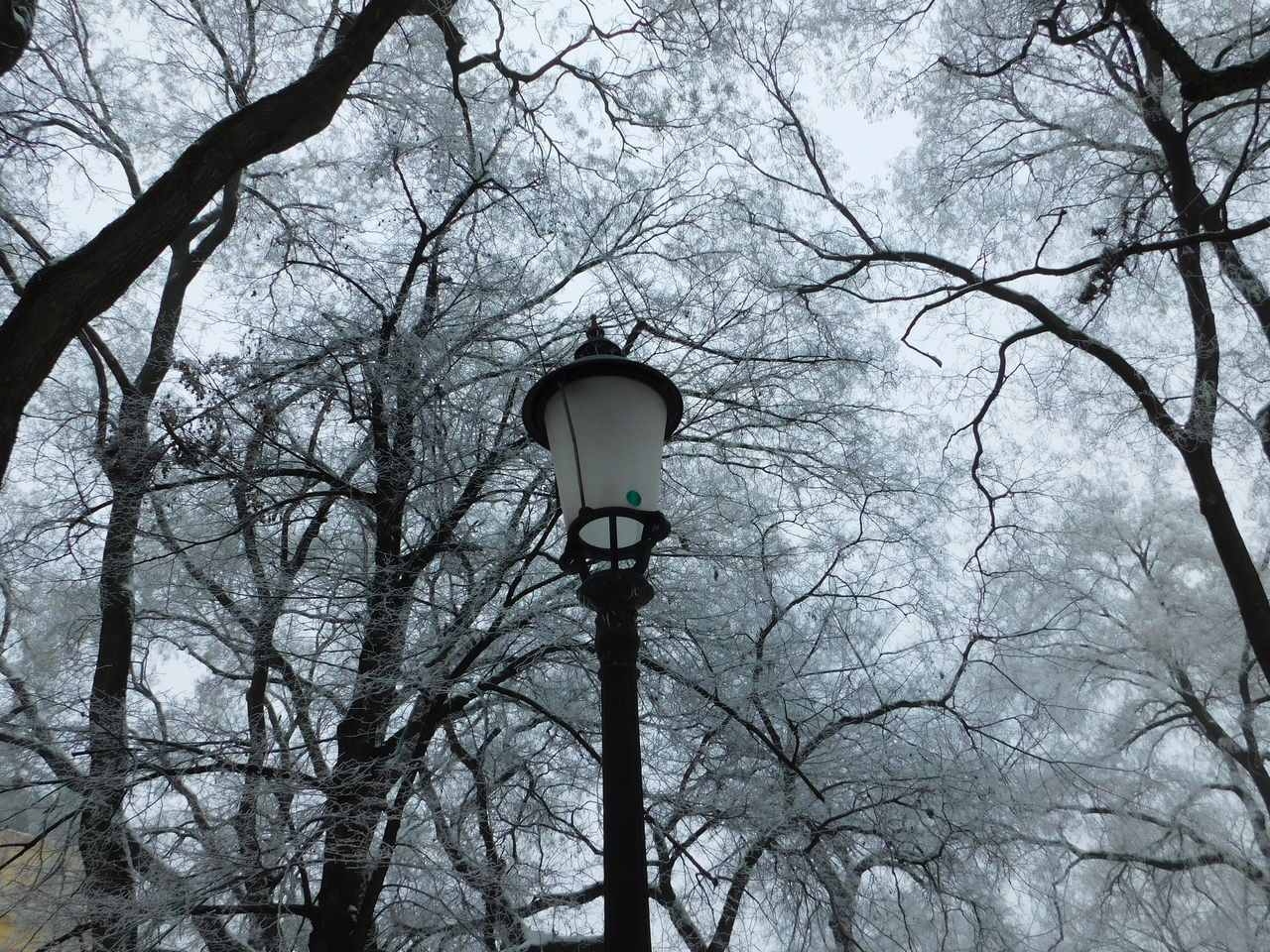 Low Angle View Of Lamp Post Against Trees During Winter