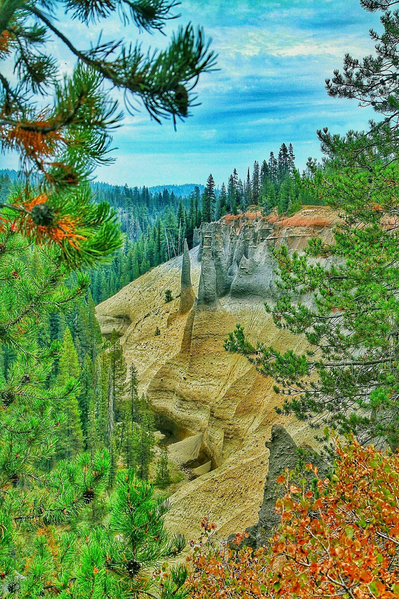 Pinnacles... Crater Lake National Park Oregon Pine