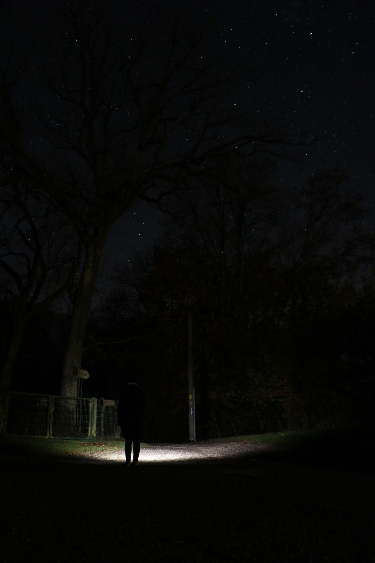Silhouette Night Dark One Person One Man Only Full Length Only Men Men People Outdoors Tree Nature Adults Only Adult Sky Astronomy Stars Torch Torchlight