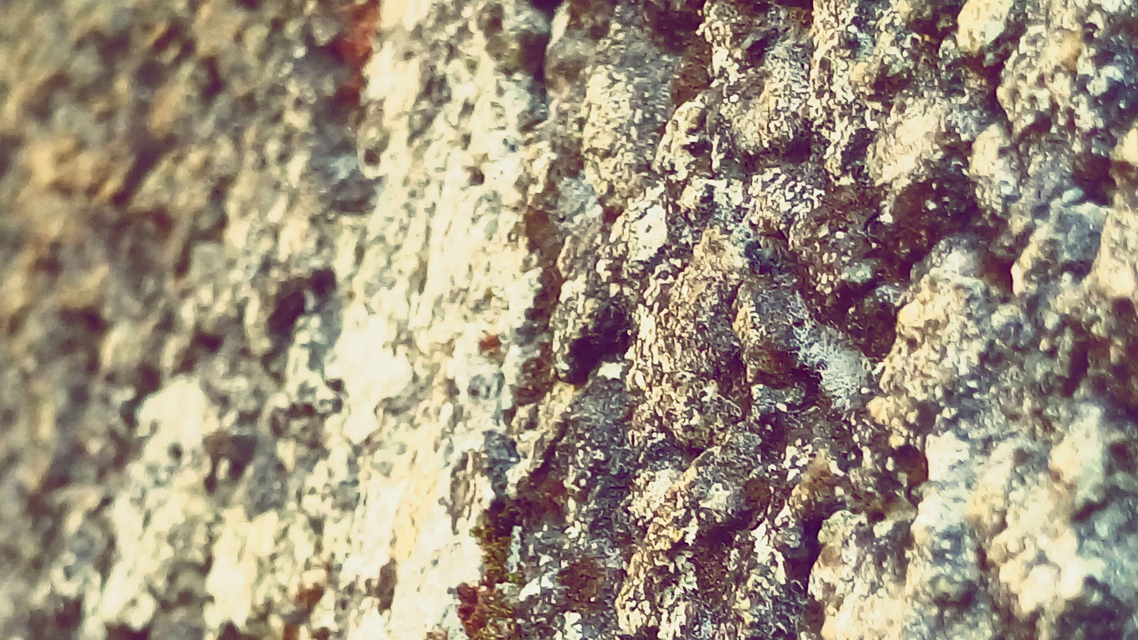 textured, rough, full frame, backgrounds, close-up, weathered, wall - building feature, pattern, day, outdoors, detail, damaged, no people, old, cracked, rock - object, selective focus, high angle view, nature, wall