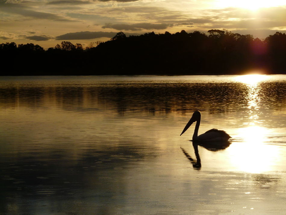 Beauty In Nature Idyllic Lake Nature Outdoors Pelican Reflection Rippled Scenics Sky Sunset Sunset Silhouettes Tranquil Scene Tranquility Tuross Lake Water