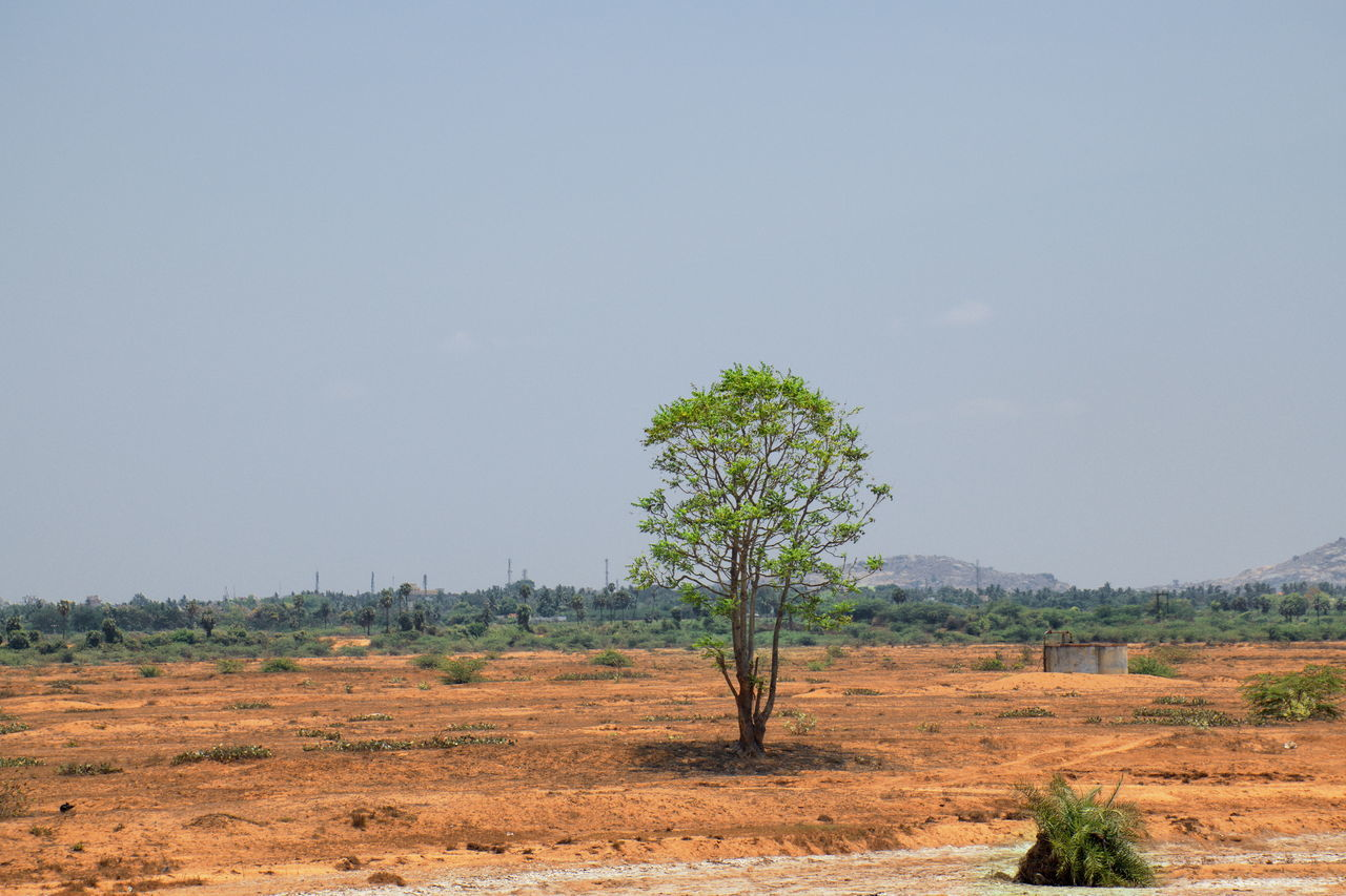 lone tree standing Field Growth Horizon Over Land Landscape No People Non Urban Scene Parched Remote Rural Scene Scenics Summer Summer Views Summertime Tree