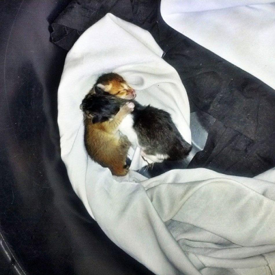 Baby cat baru lahir semalam...ank puan itam.. Catslover Catatinstagram