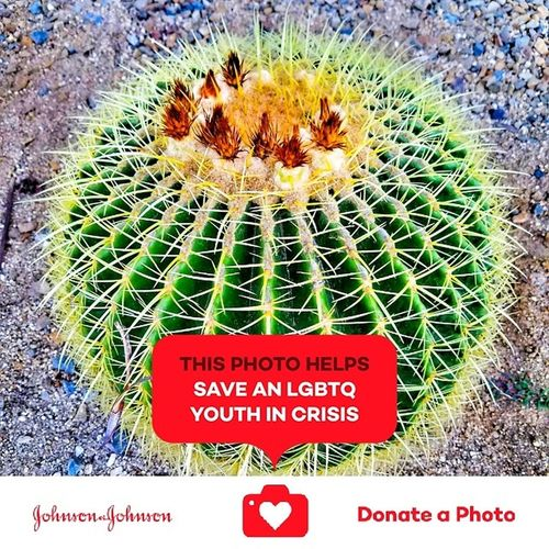 Catus collection special effects high light the color Cactus Growth Plant Nature No People Outdoors Day Close-up Special Effects Collection Just Shooting Around!! Fun Photography Collection Of The Day Johnson And Johnson Donate A Photo Johnson & Johnson Donate To Help Donate J&j To Better Lives Plants Photography Catus Plant Catus Flower Flower Head Ocean Beach San Diego Color Enhanced