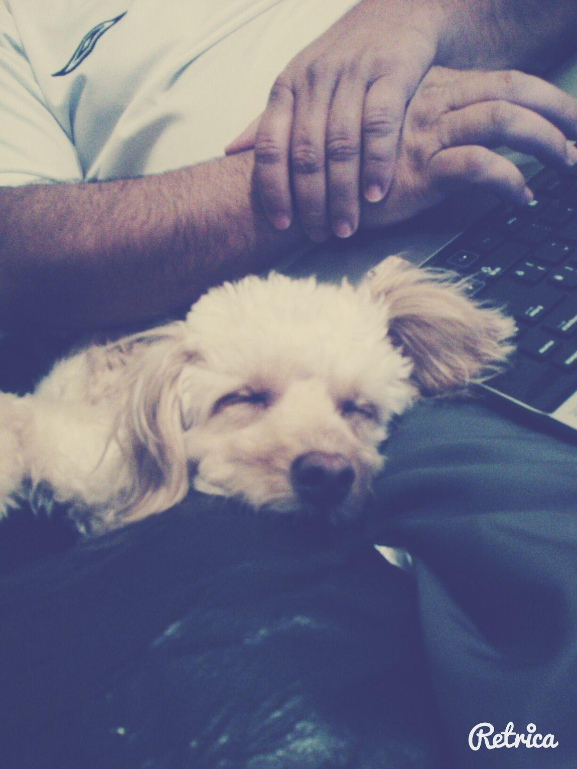 I Love My Dog!