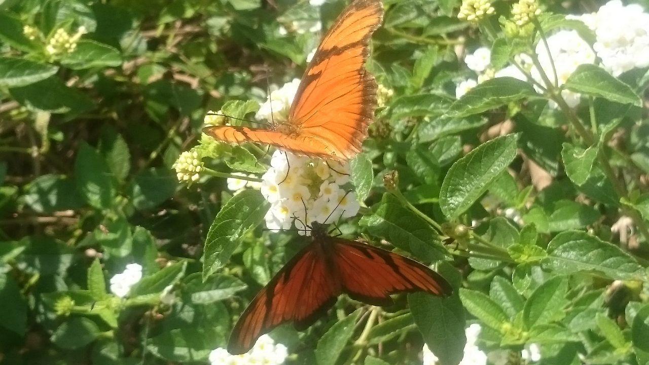 Parquedasaguas Buterfly Natureza 🐦🌳 Campinas, São Paulo, Brasil XperiaZ1 Semfiltro