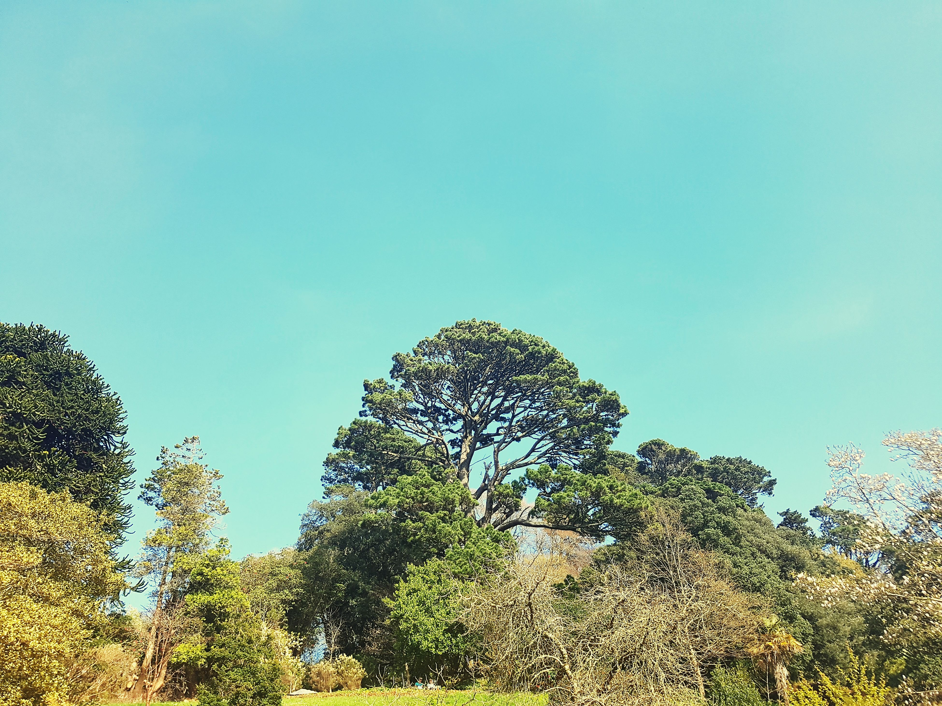low angle view, tree, nature, clear sky, growth, sky, no people, beauty in nature, day, outdoors, tranquility, treetop