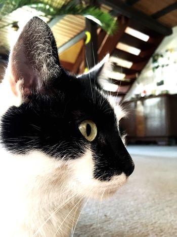 Cat Blackandwhite Animal Themes Animals Pets Animal