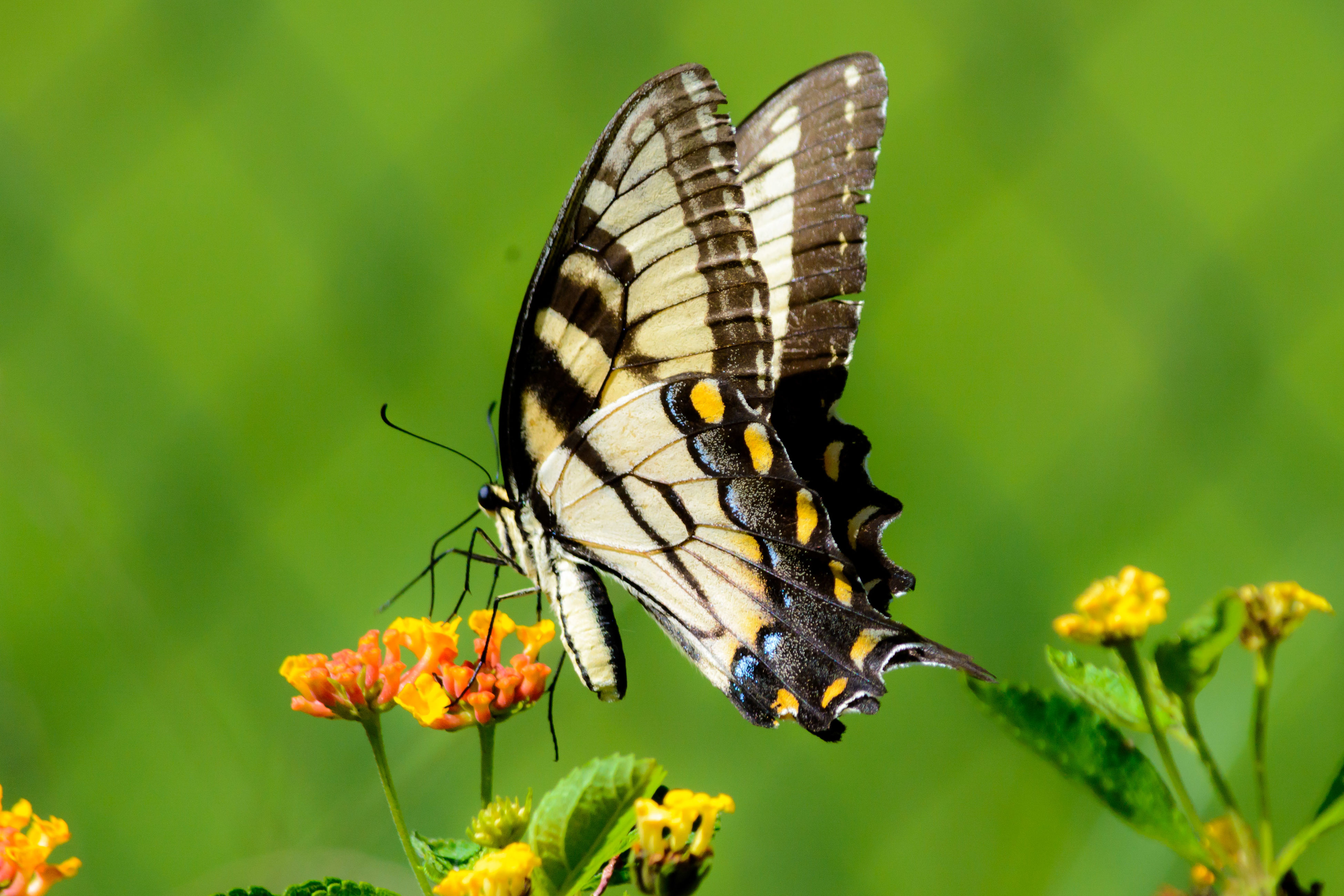 insect, one animal, animals in the wild, animal themes, wildlife, butterfly - insect, butterfly, focus on foreground, flower, close-up, fragility, plant, animal wing, beauty in nature, nature, perching, animal markings, day, outdoors, leaf
