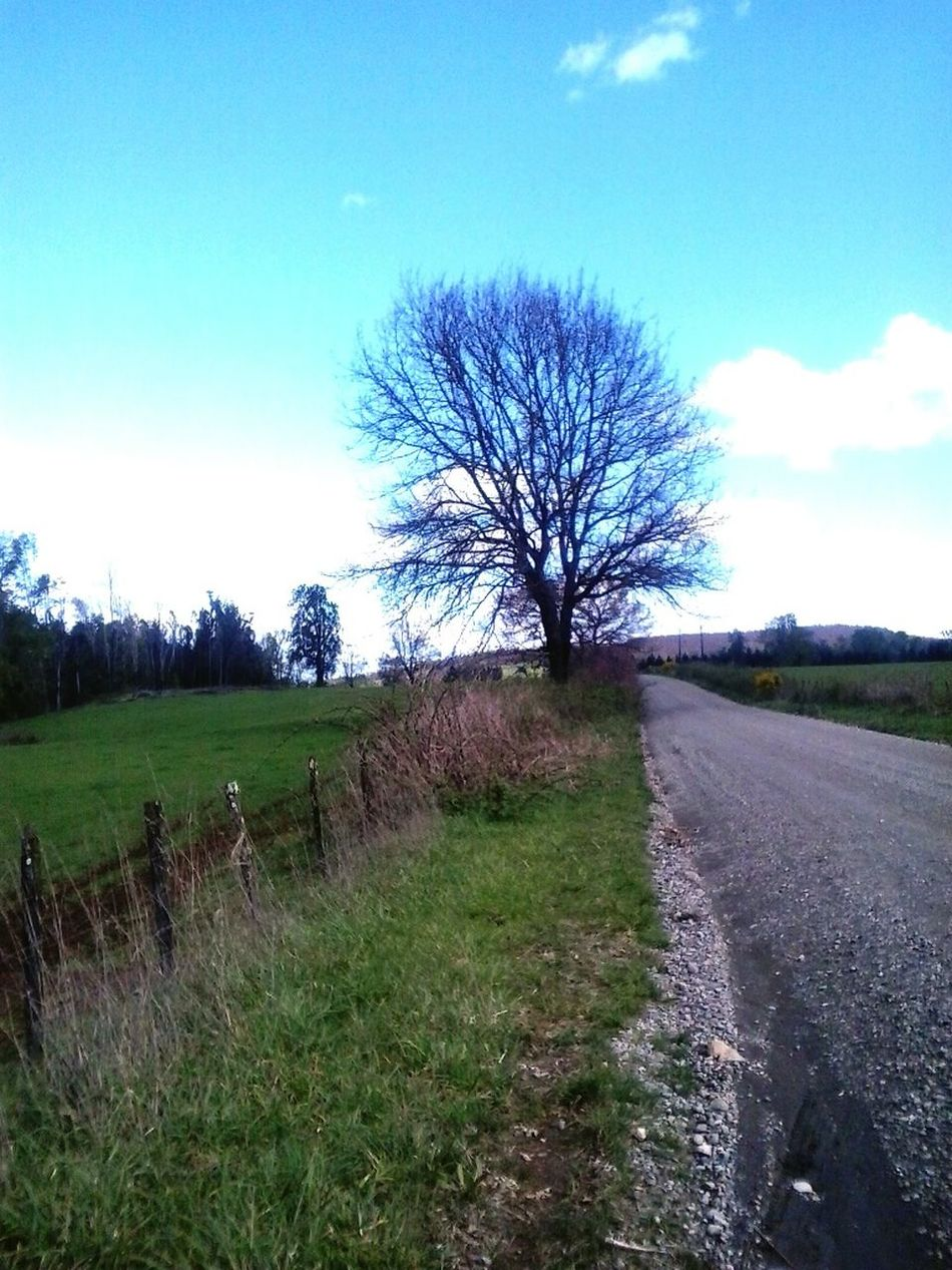 4ta faja Gorbea City Country EyeEm Nature Lover EyeEm Tree Collection Nature Photography Región De La Araucania