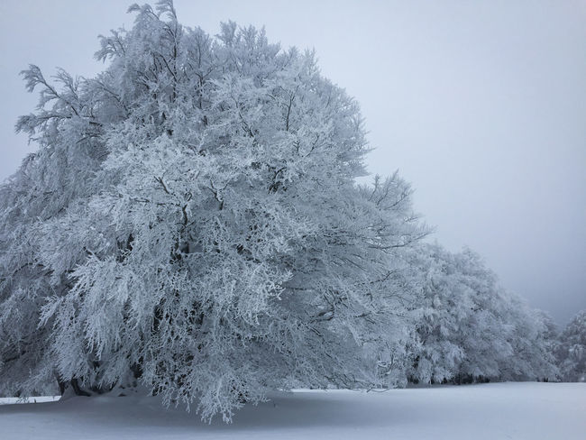 Frost Lonely Monochrone Nature Resistance  Snow Stength Tree