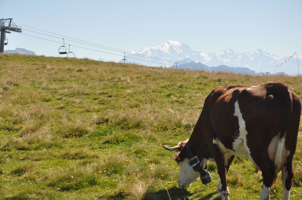 Animal Themes Beauty In Nature Cow Day Grass Grazing Landscape Mammal Mountain Nature No People Outdoors Sky