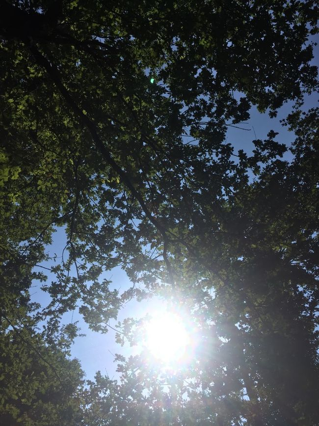 Relaxing Sleeping Under A Tree France Seine Et Marne Bois Le Roi