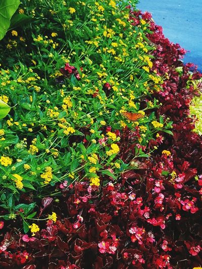 Nature Butterfly Outdoors Plant Day Flower Freshness Plant Outside Dirt Flowerbed Close-up Beauty In Nature No People