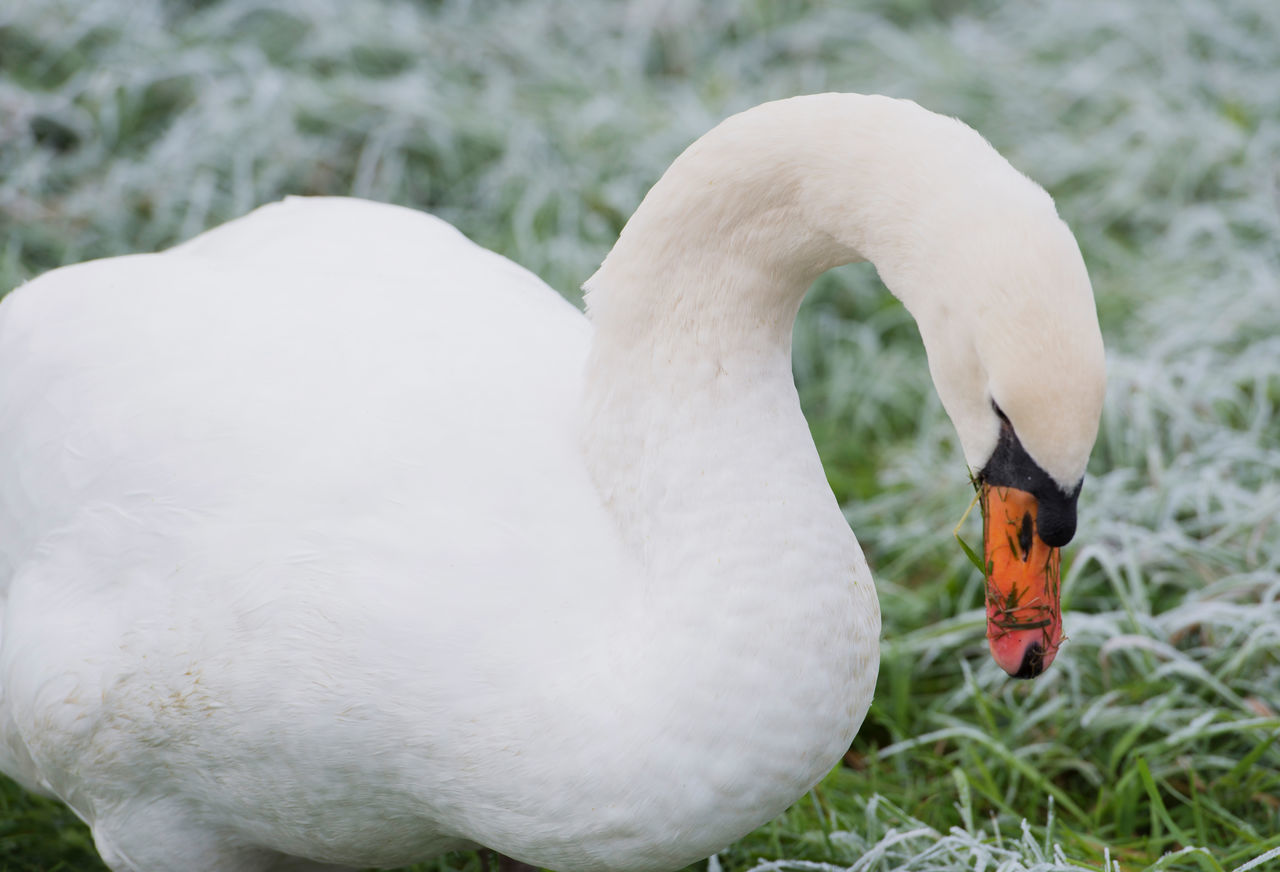 Beautiful stock photos of hump day, animal themes, bird, animals in the wild, animal wildlife