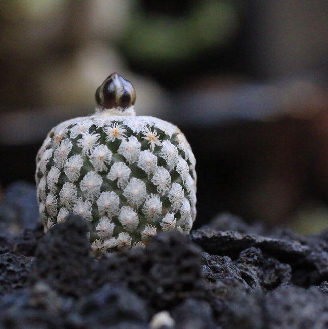 Jewell, Micro, Cactus My Garden, Taking Photos My Studio, Sculpture Learn & Shoot: Simplicity Life Is Good!