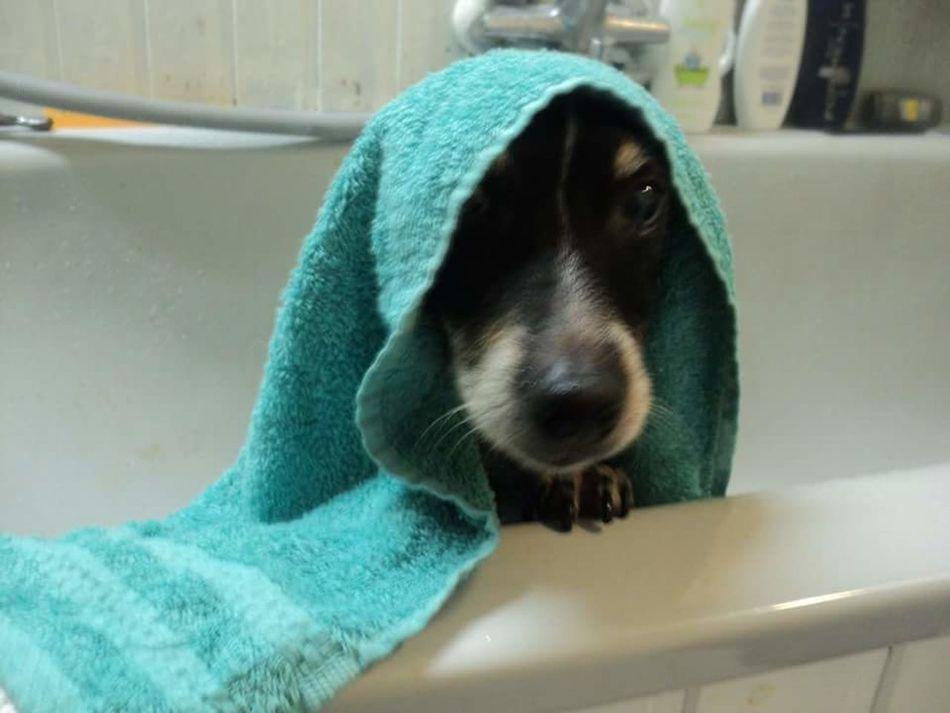 Hond Handdoek Bad Bathroom Bath Time