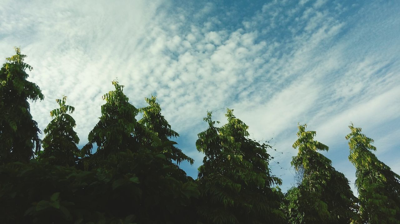 tree, growth, nature, low angle view, no people, beauty in nature, sky, green color, day, outdoors, scenics, tranquility