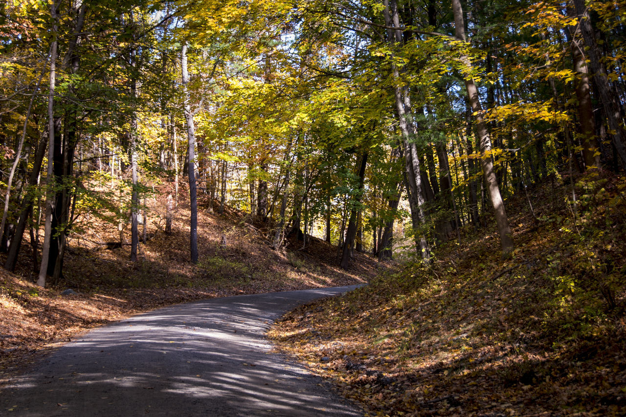 tree, road, forest, nature, scenics, outdoors, woodland, no people, day, landscape, beauty in nature, winding road, sky