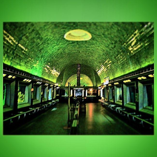 Early Morning Aquarium Aquarium Tile Green Belle_isle