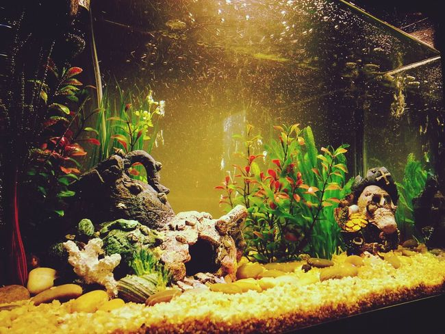 Left side of my fish tank Check This Out Our Fish Tank :) Hello World Home Sweet Home ♥