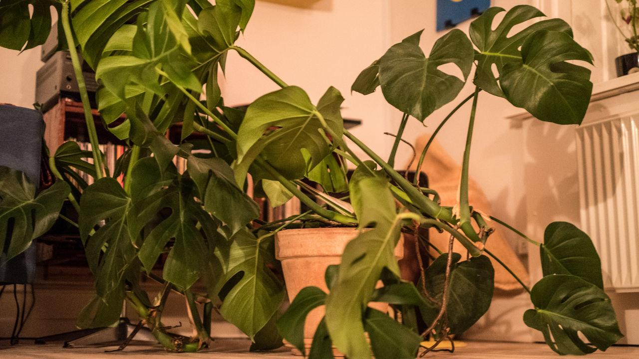 leaf, plant, growth, green color, potted plant, no people, nature, day, outdoors, freshness, beauty in nature, close-up