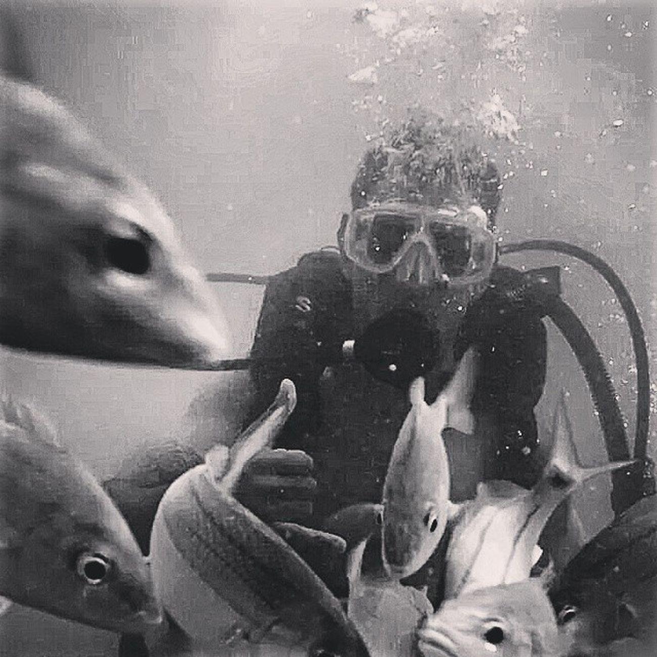 No fundo do mar é a paz que eu quero estar.. Máquina de lavar a alma. RN Natal.. Maracajaú GoodVibration Goodvibe Namaste Positivdade paz natureza fundodomar vibe vidamarinha goprophotography_ gopro