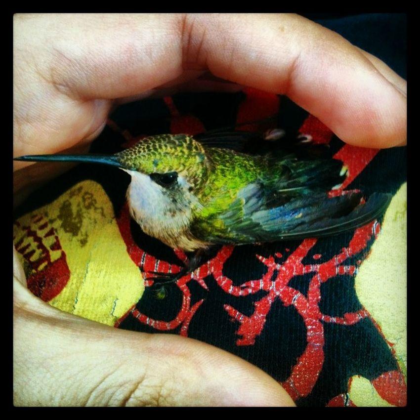 saved this little guys life Hummingbird Cute Animals Green