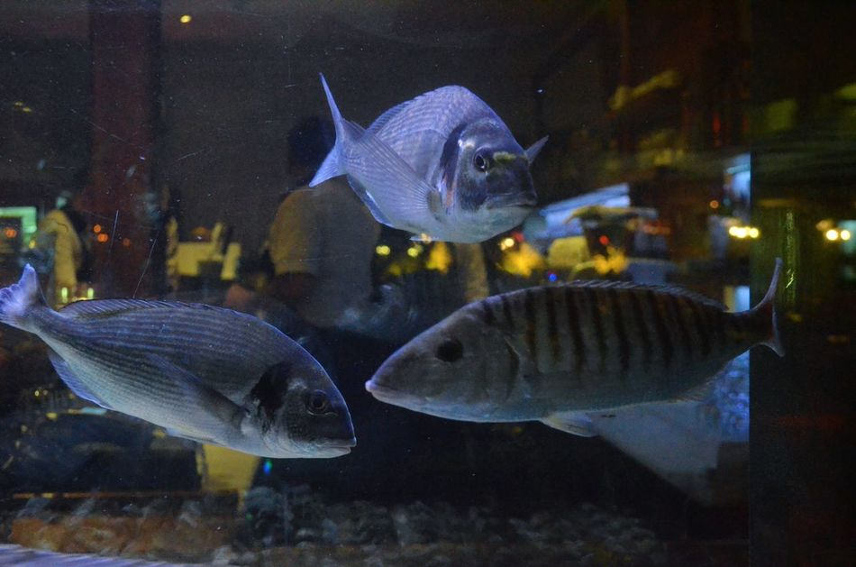 Fish Aquarium Animal Themes Animals In Captivity Swimming No People Fishtank Trough The Glass Myperspective Restaurant Moment Backround